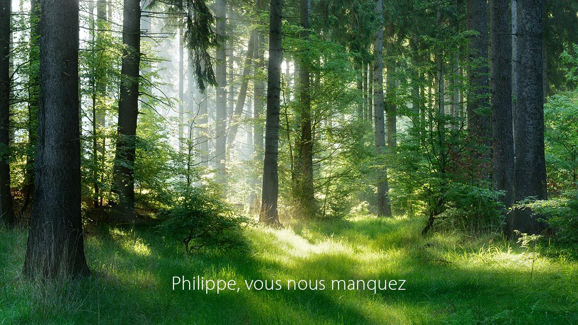 Sonnenbeschienene Waldszenerie